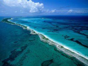 Inicia en Gran Barrera de Australia desove masivo de corales